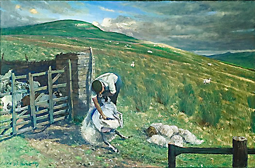 'HIGH SUMMER: CLIPPING SHEEP, WENSLEYDALE'