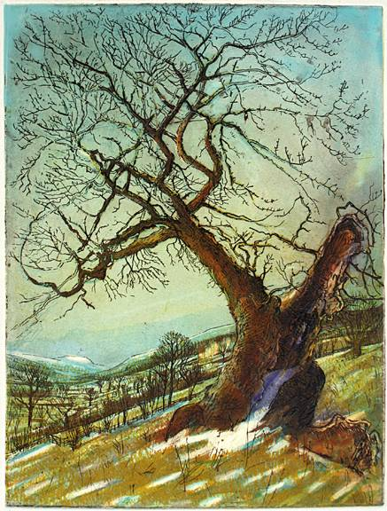 'ANCIENT HAWTHORN near CASTLE BOLTON, WENSLEYDALE'