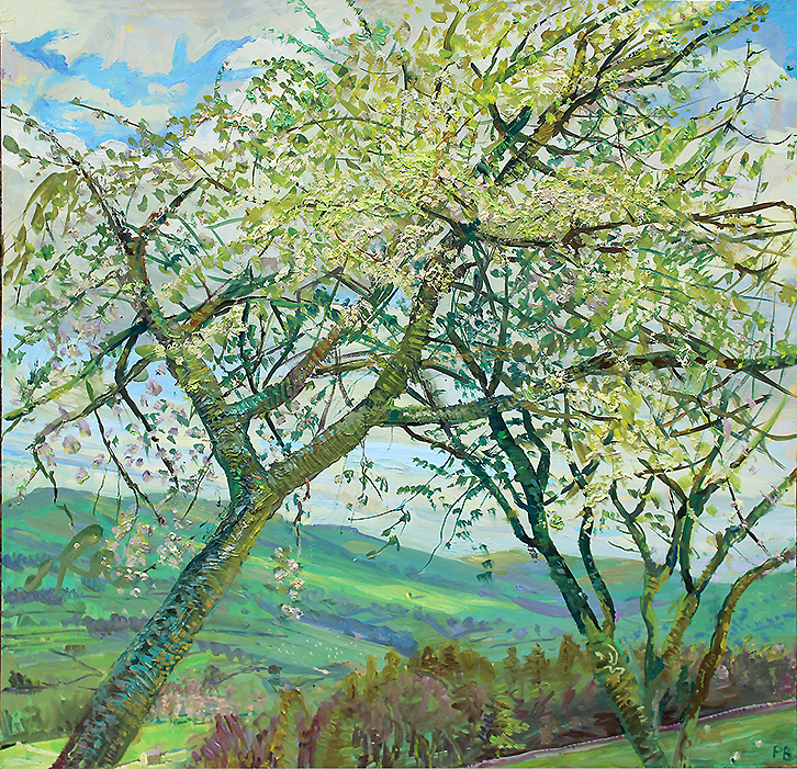 'CHERRY BLOSSOM: LOOKING UPDALE, WENSLEYDALE, MORNING'
